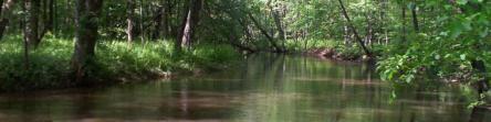turkey-creek-spring-003