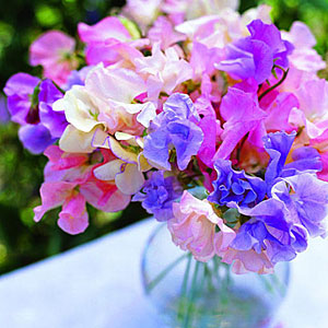 sweetpeas-bouquet-m